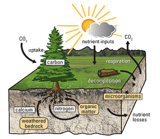 Soil-Plant Nutrient Cycle - Source: U.S. Geological Survey.