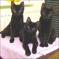 3blackcats