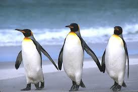 3penguins