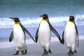 3penguins